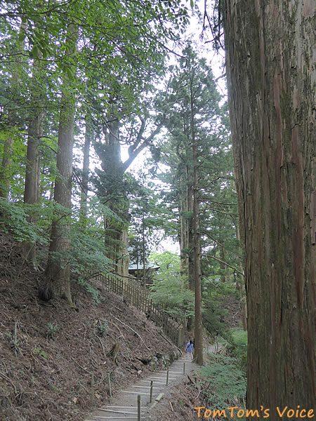 玉置神社の杉の巨木