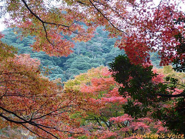 S660で行く出雲島根半島、鰐淵寺の紅葉は今が見ごろ