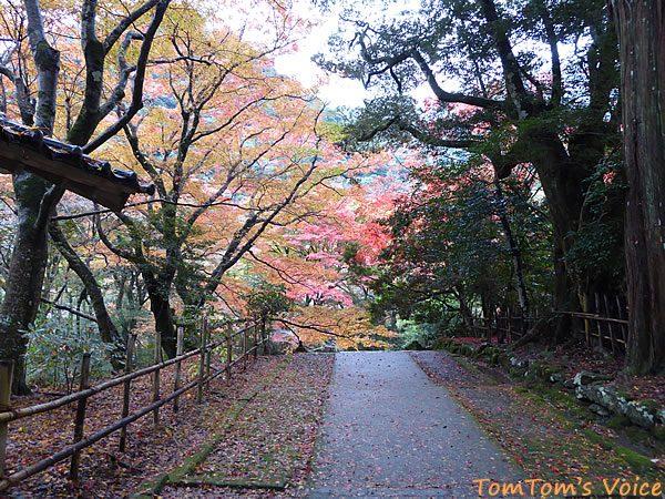 S660で行く出雲島根半島、鰐淵寺の紅葉は今が見ごろその2