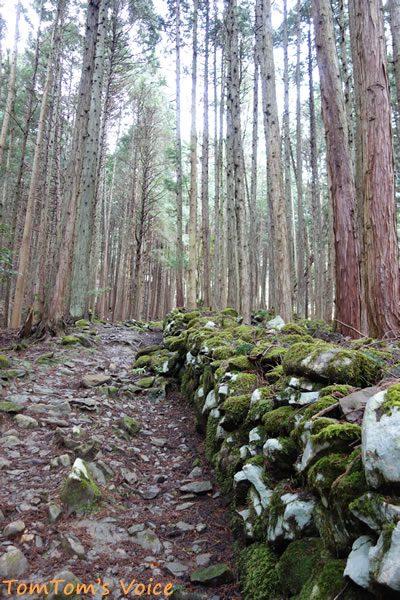 S660で行く春の但馬と丹後へのプチ弾丸ツアー、樽見の大桜までの杉の木立の中の苔むした石垣