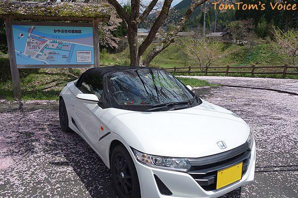 S660で行った遅い桜を探す京都美山町、美山町の中心部は花吹雪状態