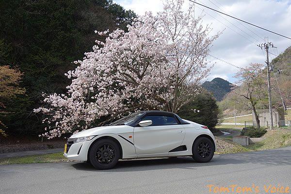 S660で行った遅い桜を探す京都美山町、復路の173へ峠越え途中の桜