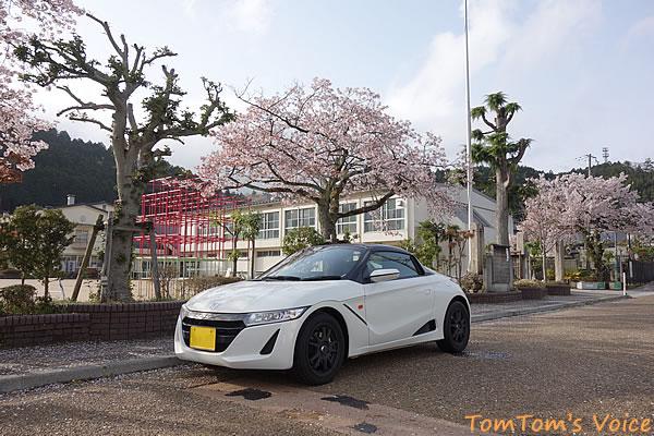 生野小学校の桜