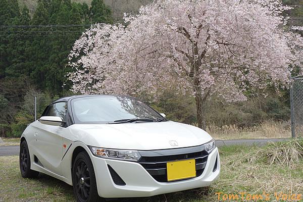 京丹波町の桜