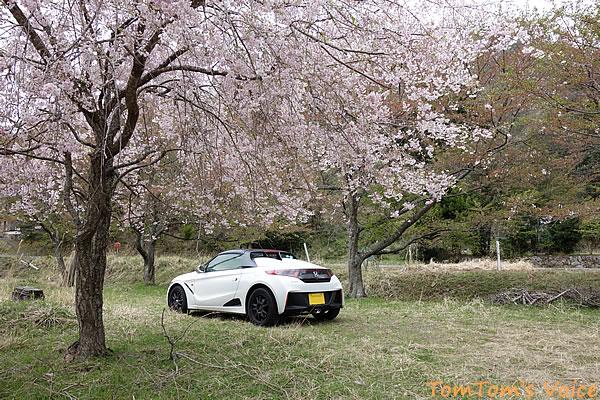 京丹波町の桜その2