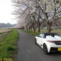 S660で行く早春の但馬で桜を満喫する弾丸ツアー しか~し峠には雪が残りスゴスゴ引き返す
