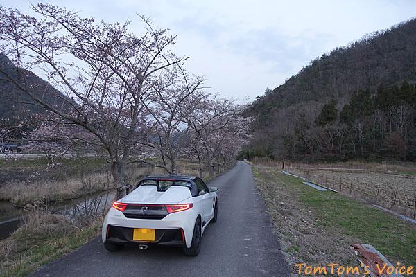 武庫川の上流部の桜並木、それほど長いわけではないがたくさんの桜があり目を楽しませてくれる