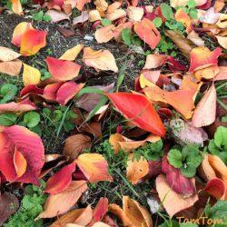 紅葉には早かったが湖北のメタセコイア並木から三方五湖をS660でグルっと回ってきた