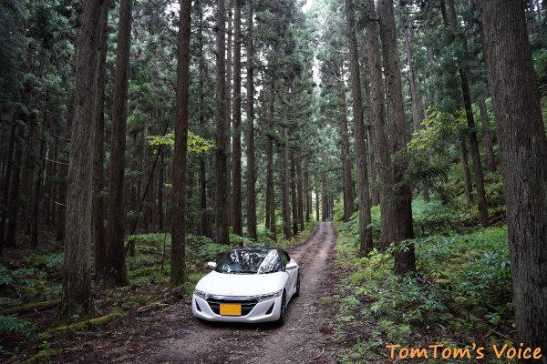 20200704杉木立が美しい未舗装林道