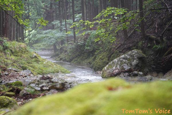 20200704あまり人の気配がしない静かな森、素晴らしい渓流もある