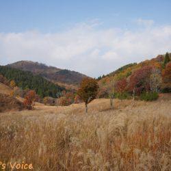 秋を満喫しにS660で砥峰高原へ行ってきた すすきと紅葉がきれいだった