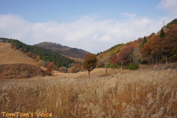 20201108の砥峰高原のすすきが生えているところは木道とかで保護されている
