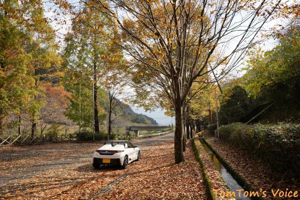 20201108砥峰高原の東側、長谷ダムの並木道その2