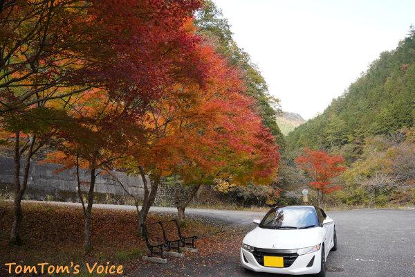 20201108生野町の銀山湖のほとりの紅葉したもみじ