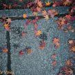京都高台寺で見つけた石畳と紅葉